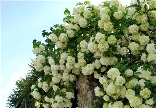 Linhares - flores 1