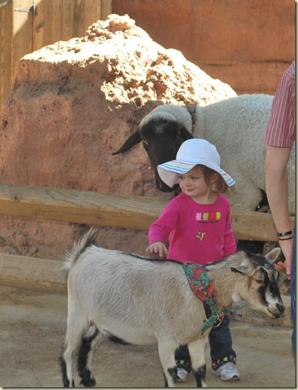 11-01 Keelie Goat