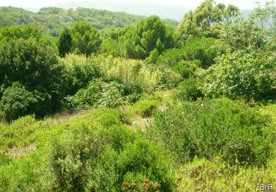 vegetation_san_pietro