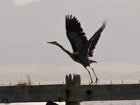 HeronLaunch