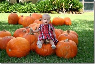 Pumpkin Patch 066 photoshop