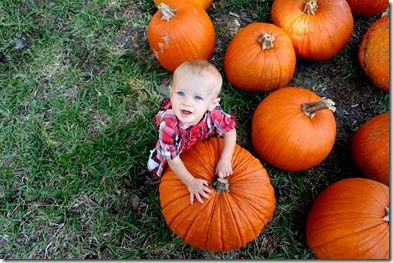 Pumpkin Patch 145 photoshop