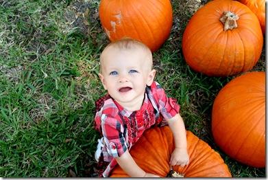 Pumpkin Patch 149 photoshop