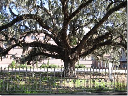 Savannah Trip and More! 093