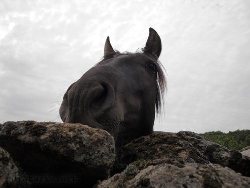 mirada-de-caballo.5ampqCj0mGDW.jpg