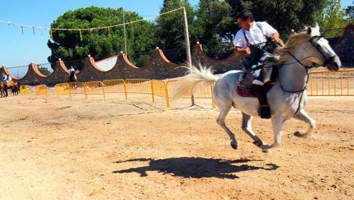caballos.yFTdjbEIhdpC.jpg