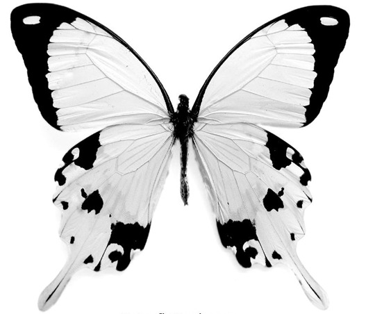 5-butterfly_coloring_page