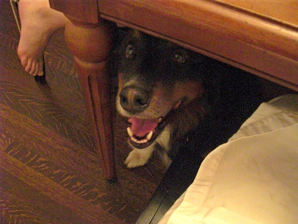 Cooper under the table