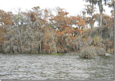 swamp tour 041