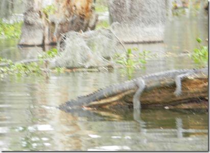 swamp tour 057