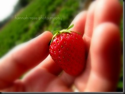 Strawberries! 207
