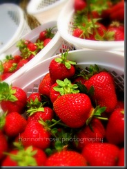 Strawberries! 219