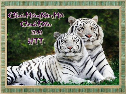 http://lh5.ggpht.com/_6nktQOihaMo/S21CNuaViKI/AAAAAAAAJV8/49lxtzaTNRM/1-white_tigers.jpg