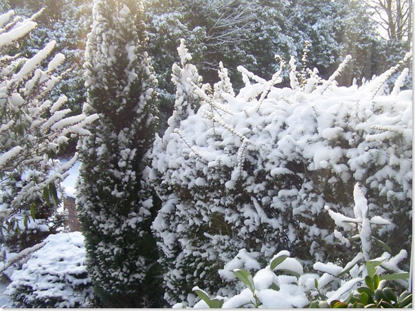 snow_garden1