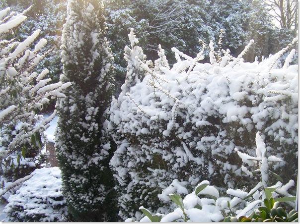 snow_garden1