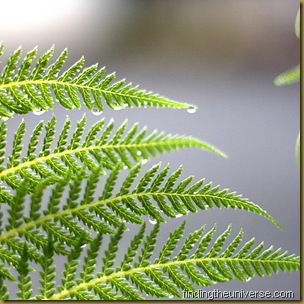 Water covered fern fronds