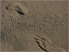 090927footprints_sand