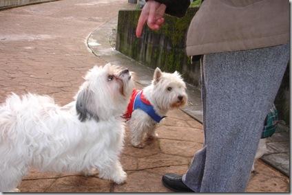 Lassie y Duna
