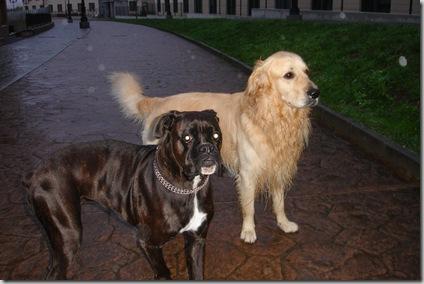 Otto y Yuca