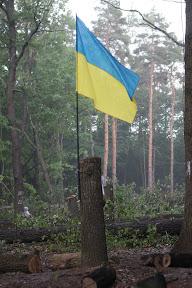 (с) Главное: Активисты используют все способы для защиты деревьев.