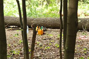 Продолжают пилить деревья