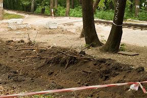 покалеченые корни деревьев