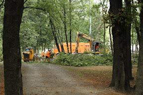 Уничтоженные деревья возле Сумской...