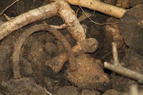 кость и подкова от сапога (на отвале)