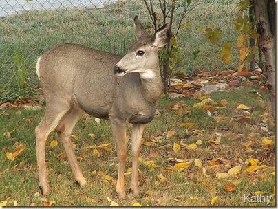 Deer-OKFalls7