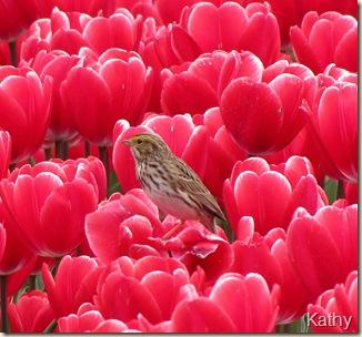 Tulip Festival 064