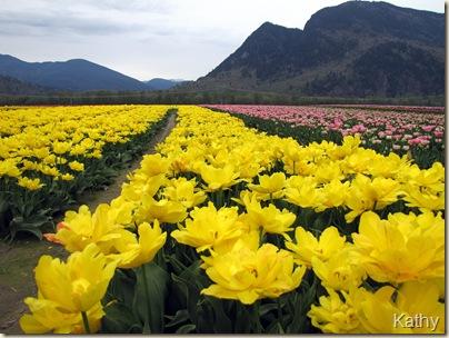 Tulip Festival 023