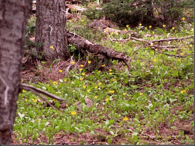 Manning Park June 27'10 051