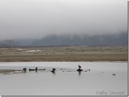 Eagles and a gull in the gloom