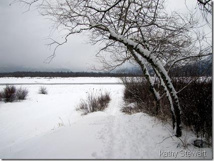 Snowy February 27th