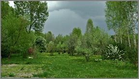 Mój ogród półdziki