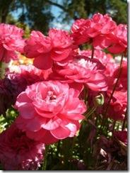 Flower Carnival 00018