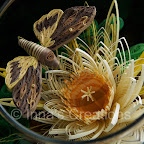 Quilling in a fish bowl, butterfly close-up