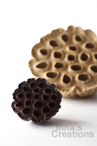 Dried sacred lotus seedpod