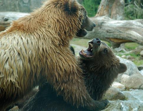 luta entre animais desbaratinando (17)