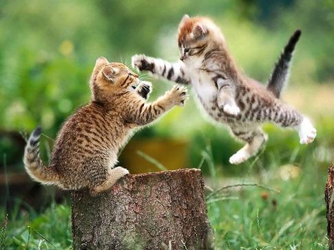 luta entre animais desbaratinando (31)