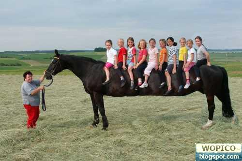 Longest Horse