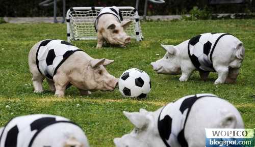 Soccer Pig
