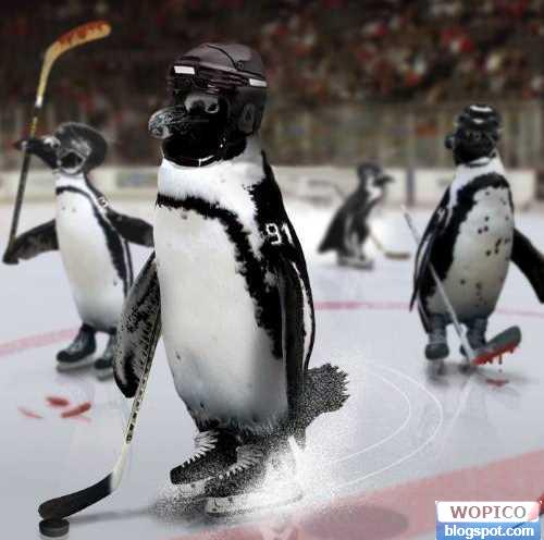 Penguin Hockey