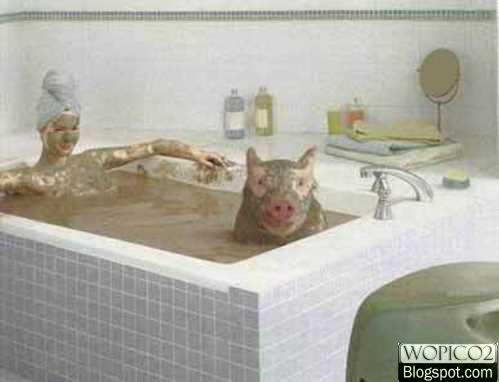Pig Bath