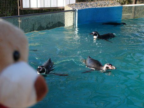 http://lh5.ggpht.com/_7ODftPSZPsY/S5QXwfLLjEI/AAAAAAAAAcg/QFELDMwvdR8/penguins1.jpg