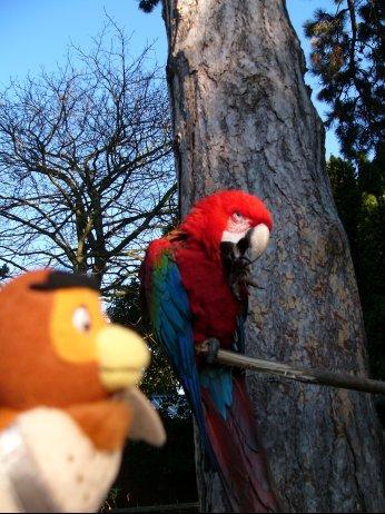 http://lh5.ggpht.com/_7ODftPSZPsY/S5Zt7EwGK9I/AAAAAAAAAdA/PcxUPb9GC5g/macaw1.jpg