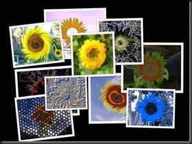 10 10 10 Sunflowers5