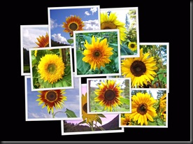 10 10 10 Sunflowers3