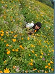 Sunflower Garden (8)