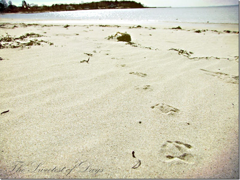 Gull prints in the sand